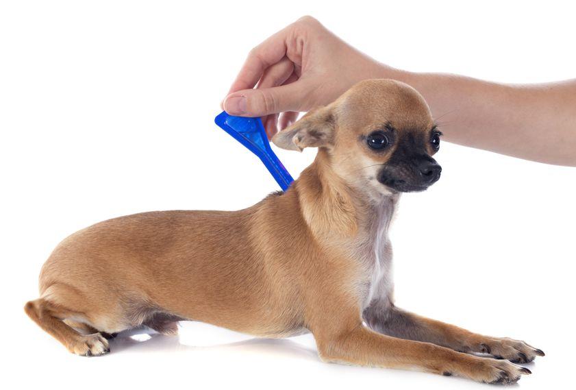 Santé animale : 4 principaux parasites externes qui affectent les animaux de compagnie