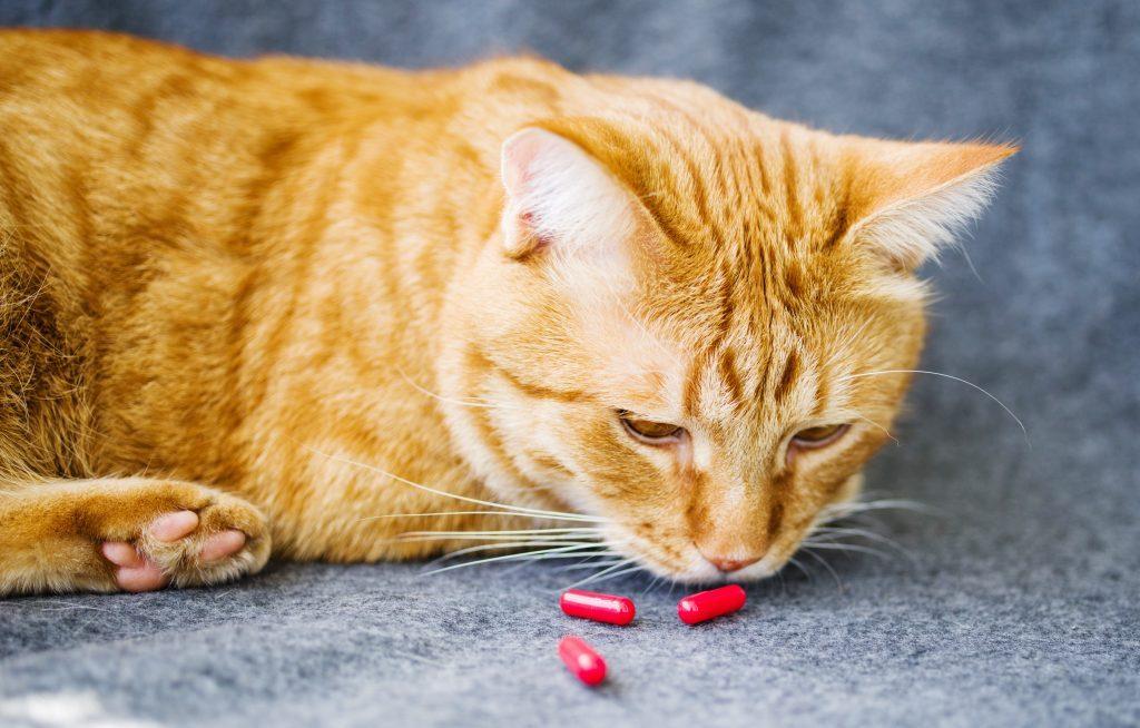 Quelle pilule pour chat?
