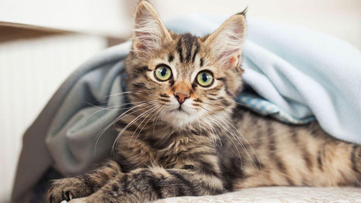 5 conseils pour bien choisir son chaton