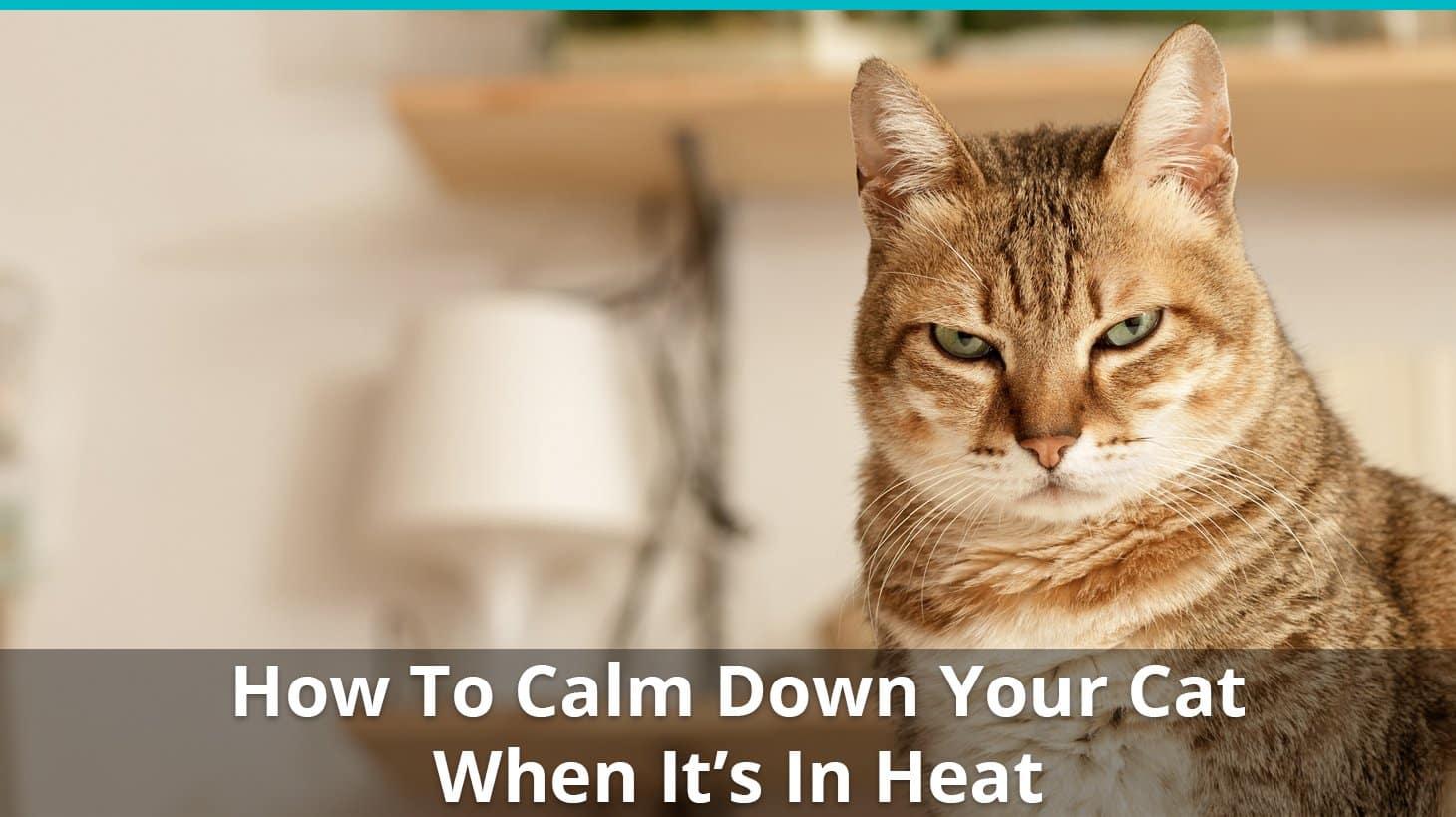 Comment calmer la chaleur?