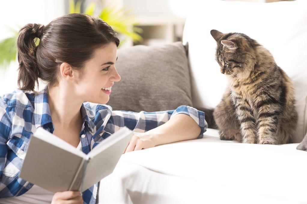 Comment faire pour soigner son vieux chat à domicile ?