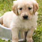 Comment choisir des croquettes pour chien ?