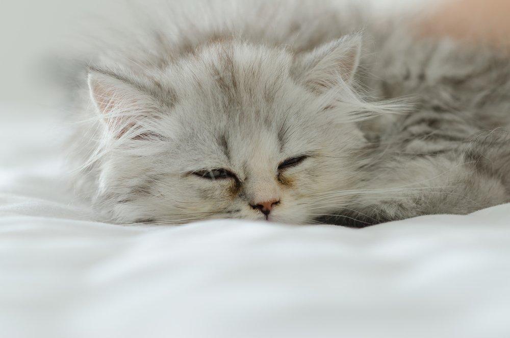 Comment aider un chat à vomir?