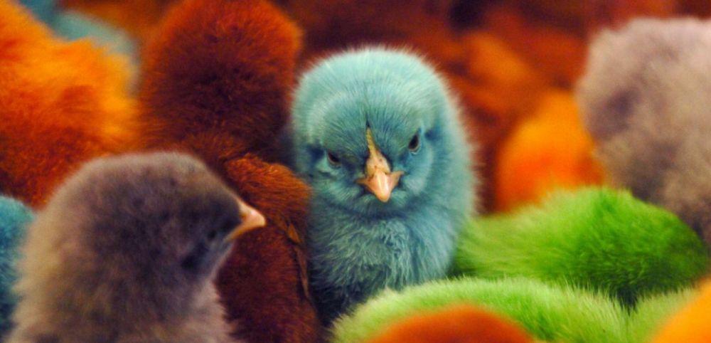 Avoir un oiseau comme animal de compagnie : bonne ou mauvaise idée ?