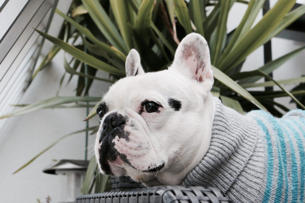 Comment prendre soin de son chien en hiver ?