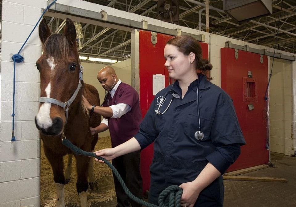 Le soigneur animalier: en quoi consiste ce métier?