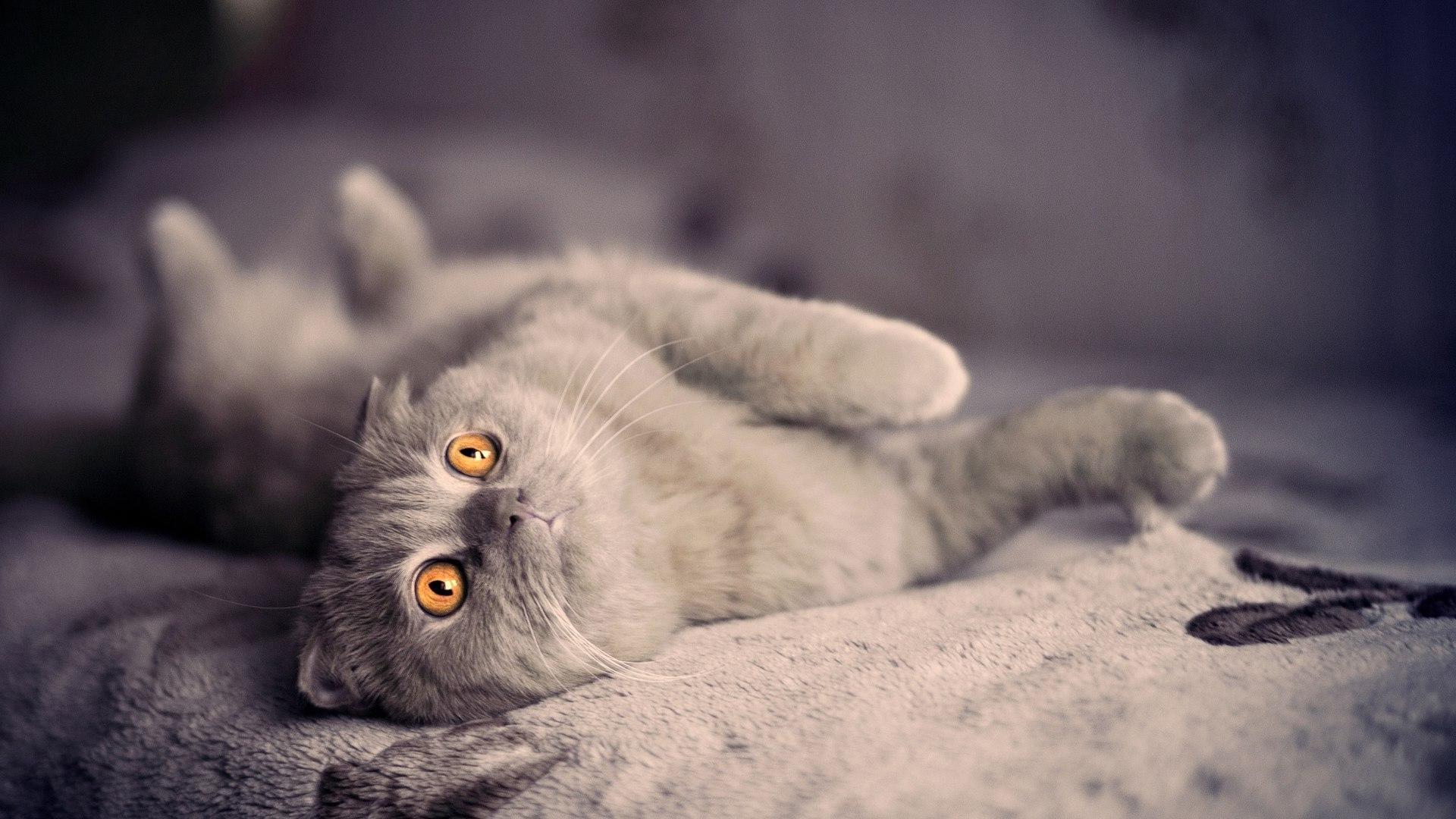 Mon chat fait ses griffes sur la tapisserie : que faire ?