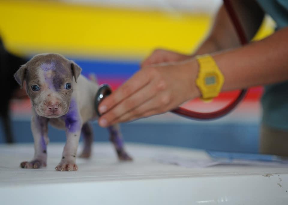Offrir à vos animaux de compagnie une expérience vétérinaire exceptionnelle